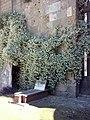 Cimiterio ebraico di pisa 2014 n.jpg