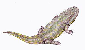 Eryopidae - Image: Clamorosaurus 1DB