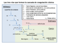 Classical blood coagulation pathway es.png
