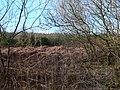 Clocaenog Foest - geograph.org.uk - 390151.jpg