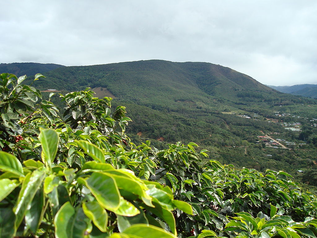 Coffee-farm-san-marcos-tarrazu-costa-rica