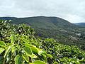 Coffee-farm-san-marcos-tarrazu-costa-rica.jpg
