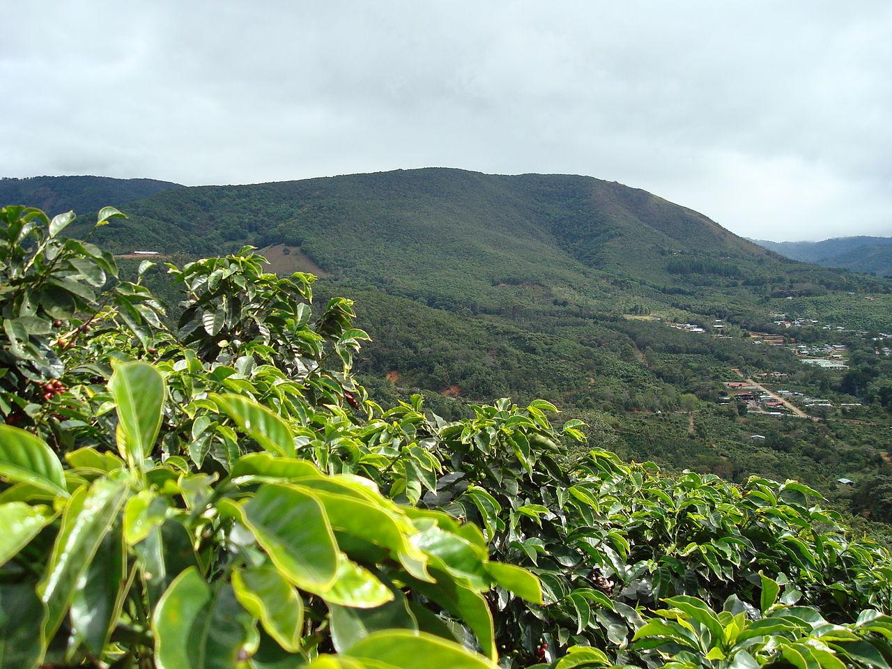 Coffee Tour Costa Rica Guanacaste