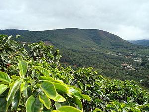 English: Coffee farms in San Marcos Tarrazu