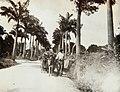Collectie Nationaal Museum van Wereldculturen TM-60062012 Landweg Barbados fotograaf niet bekend.jpg