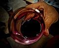 Color of Wine.jpg