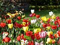 Colorful flowers 1020.JPG