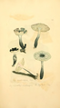 Coloured Figures of English Fungi or Mushrooms - t. 171.png