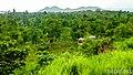 Comunidad EL PROGRESO, en la Área Indigena de SUCATPIN, llano sur, Puerto Cabezas. - panoramio.jpg