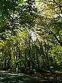 Conemaugh Gap Early Fall 2016 - panoramio - Ron Shawley (29).jpg