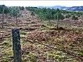 Conifer plantation on Meall Reamhar - geograph.org.uk - 773606.jpg