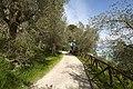 Contrada Castello, 06061 Castiglione del Lago PG, Italy - panoramio (56).jpg