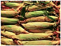 Corn on the Cob - Flickr - pinemikey.jpg