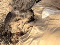 Corpse of a presumed Boko Haram member2.jpg