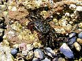 Crabs barnicles ocean tidepools sea.jpg