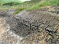 Cracked Peat - geograph.org.uk - 833725.jpg