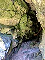 Creswell Gorge, Creswell Craggs, Notts (23).jpg