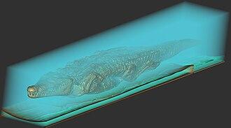 Volume ray casting - Image: Croc.5.3.10.h gb 1