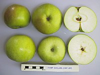 Cross section of Champ-Gaillard, National Fruit Collection (acc. 1947-207).jpg