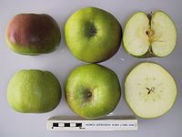 Cross section of Nemes Szercsika Alma, National Fruit Collection (acc. 1948-394).jpg