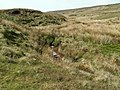 Crowden Little Brook - geograph.org.uk - 423641.jpg