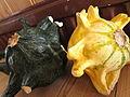Cucurbita pepo ornamental - Gourds.jpg