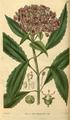 Curtis's Botanical Magazine, Plate 3046 (Volume 58, 1831).png