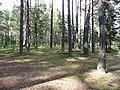 Dūkšto sen., Lithuania - panoramio (39).jpg
