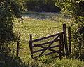 Dandelion Meadow.jpg