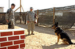 Day in the life of a military working dog handler DVIDS128249.jpg
