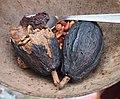 De la cabosse au cacao, savane des esclaves, Martinique.jpg