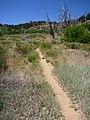 Deer Trap Mountain Trail - panoramio (3).jpg
