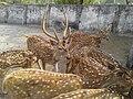Deer with Group.jpg