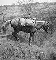 Demonstraties paardendepot Z Sumatra laspaard bepakt met Vickers machinegeweer, Bestanddeelnr 15652.jpg