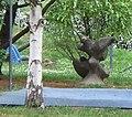 Denkmal-Auffliegende Vögel-Donaustadt-01.jpg