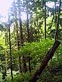 Denzlingen Wald - panoramio (2).jpg
