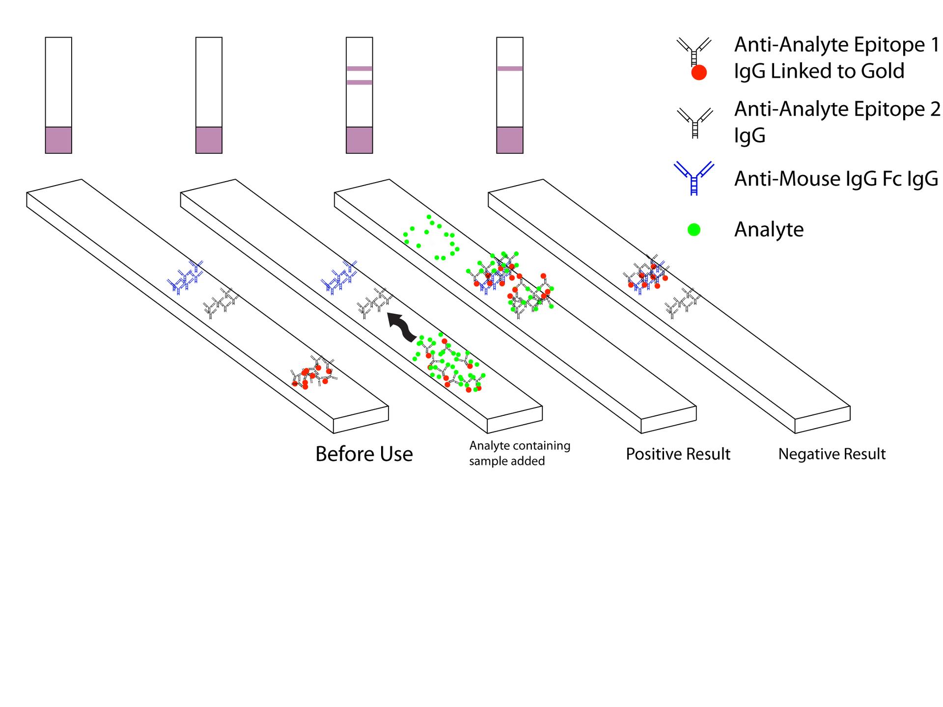 malaria antigen detection tests
