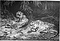 Die Gartenlaube (1880) b 385.jpg