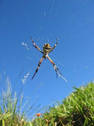 A spider at the Rainbow World Gathering 2004 in the south of Costa Rica near the Parque Internacional la Amistad