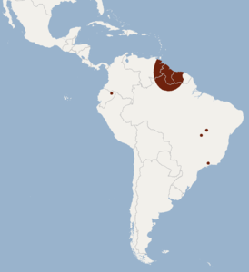 Distribution of Eumops maurus.png
