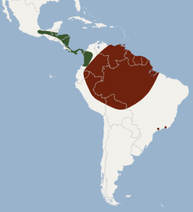 Distribution of Vampyrodes caraccioloi.png