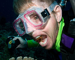 Diver with Cleaner Shrimp (3385504415).jpg
