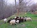 Do Rudan, Hamadan Province, Iran - panoramio (6).jpg