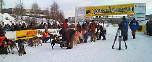 A team of dogs, still in harness, is surrounded by caretakers and spectators; in the background is the finish line with a Yukon Quest banner strung overhead