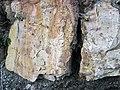 Dolostone (Rockford Limestone, Lower Mississippian; Burkesville West Rt. 90 roadcut, Kentucky, USA) 4 (45898562494).jpg