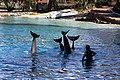 Dolphin Cove 02.jpg
