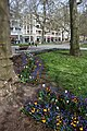 Drážďany, Hauptstrasse, květiny.jpg