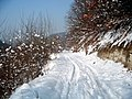 Drum forestier către Balta Cozia (accesibil auto) - panoramio.jpg