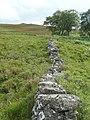 Dry stone wall - geograph.org.uk - 1387894.jpg