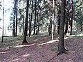 Dusetų sen., Lithuania - panoramio (123).jpg